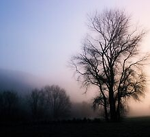 Tree in the mist. Hutt River Park, Upper Hutt, New Zealand by Fineli