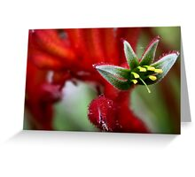 Kangaroo Paw Greeting Card