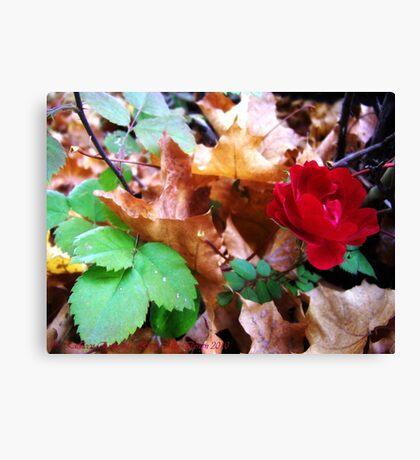 Autumn Rose Canvas Print