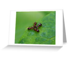 Ant Huddle Greeting Card