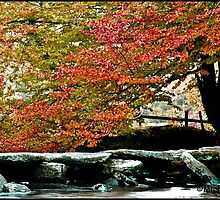Tarr steps in autumn by Michelle  Ley