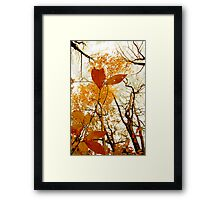 Withering Heights Framed Print