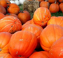 Pumpkins, Pumpkins, Pumpkins! - Manotick, Ontario by Debbie Pinard