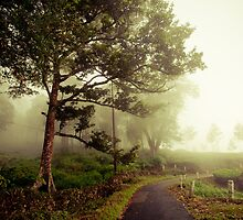 CLOUDED IN- Tea plantations, Munnar, India by Andrianne