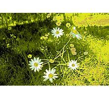 cartoon flowers Photographic Print
