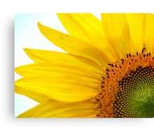 Feeling Sunny Canvas Print