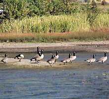Get Your Geese in a Row by DebbieCHayes