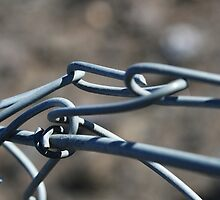 Wire fence by Joanne Emery