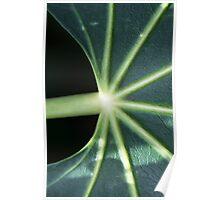 Leaf - close up Poster