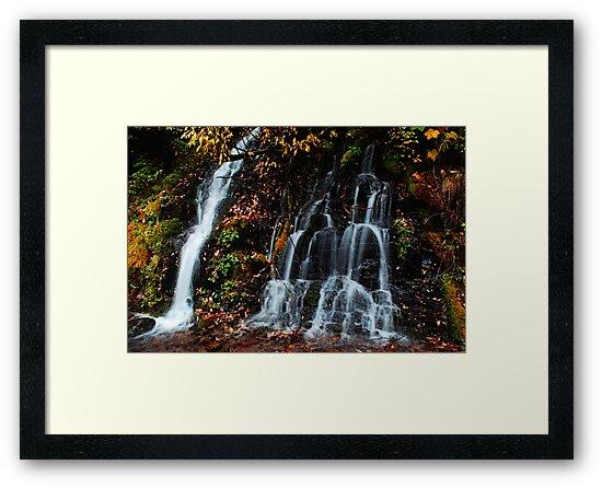 Autumn Falls by Tori Snow