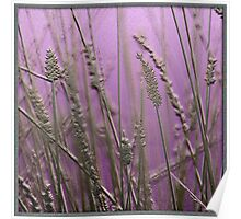 Reeds Purple Poster