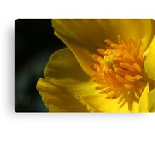 Yellow flower centre - macro Canvas Print