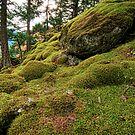 Mossy Place by Carolann23