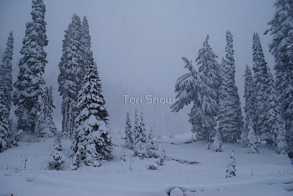First Snowstorm by Tori Snow