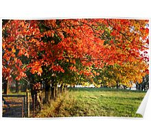 Bursts of Fall Color Poster