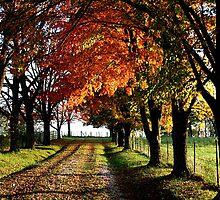 The Road Not Taken ... in Fall by John Carpenter