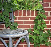 Chair and Plant by virginian
