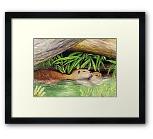 Otters Floating - Watercolor Pencil Drawing Framed Print