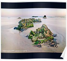 Critter Rock Shore Poster