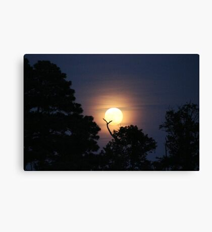 Blue Moon and Trees Canvas Print