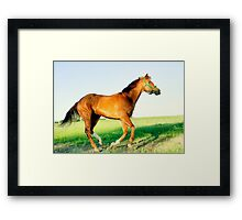 Fury: King Of The Wild Framed Print