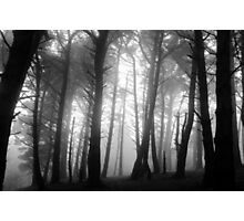 Misty forest on Killiney Hill Photographic Print