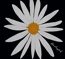 WHITE DAISY BLACK by RoseLangford