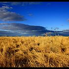 Colours After Rain - N.S.W Australia. by Anna Ryan