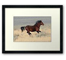 Dark Stallion Framed Print