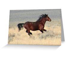 Dark Stallion Greeting Card