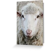 Sheep's eyes Greeting Card