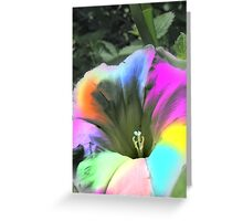Colourful Flower Greeting Card