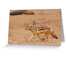 Black-backed Jackal ~ Namibia Greeting Card