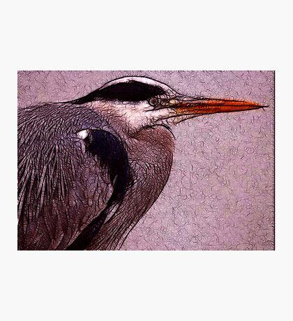 Grey Heron Photographic Print