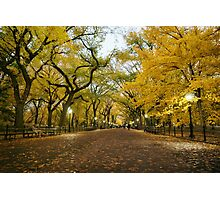 Central Park - Autumn -  Literary Walk - New York City Photographic Print