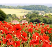 Poppies along the Downs by JEZ22