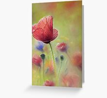 Poppies. Greeting Card