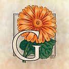 G is for Gerbera by Stephanie Smith