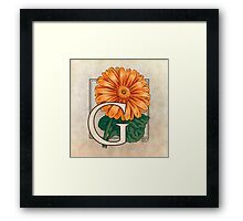 G is for Gerbera Framed Print