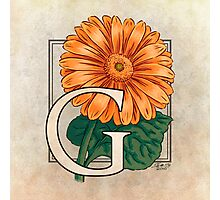 G is for Gerbera Photographic Print