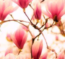 Spring Cherry Blossoms Sticker