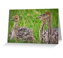 The three amigos ..... Greeting Card