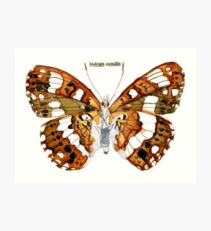 Ladoga Camilla (White Admiral Butterfly) Art Print
