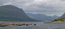 Loch Etive With Seals by WatscapePhoto