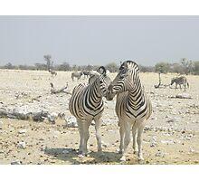 Zebra couple, Etosha Photographic Print