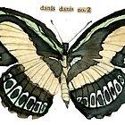Danis Danis #2 (Large Banded Blue #2) - underside by Carol Kroll