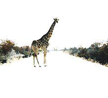 Giraffes, Etosha Photographic Print