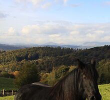 Beautiful view for the horse! by Clare Gelderd