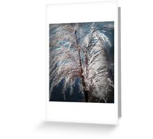 Cat Tails in California Greeting Card