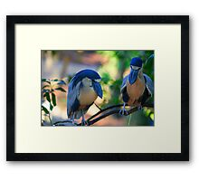 Soo, what do you think? Framed Print